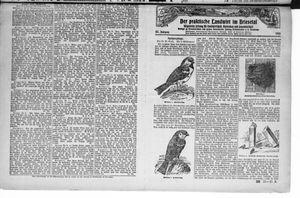˜Derœ praktische Landwirt im Briesetal vom 26.06.1926