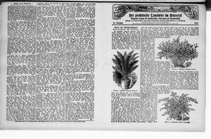 ˜Derœ praktische Landwirt im Briesetal vom 19.07.1928