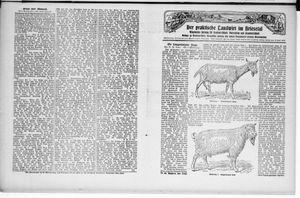˜Derœ praktische Landwirt im Briesetal vom 24.09.1929